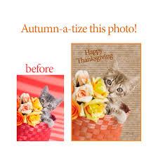 thanksgiving 2014 greeting cards retro kitten greeting card archives kelly richardson