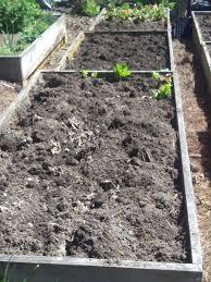 stems n u0027 roots a backyard farm eastwestfarm