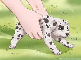 how to house train a puppy with pictures wikihow