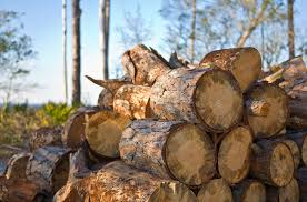 when is the best time to buy firewood digital gate it
