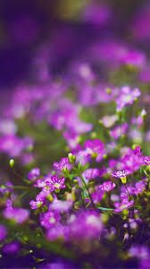 Flower Field Wallpaper - wallpaper wiki beautiful purple flower field blur bokeh iphone