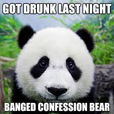 Sad Bear Meme - got drunk last night banged confession bear sad party panda