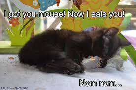 Nom Nom Nom Meme - grimm the black cat meme nom nom by tarsicius on deviantart
