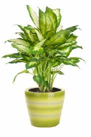 indoor plants that need no light 10 best indoor plants images on pinterest houseplants indoor