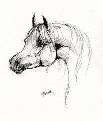 arabian horse drawing 6 drawing angel tarantella