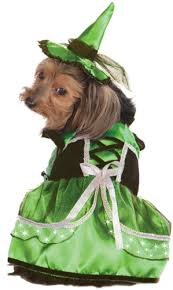led light up witch dog costume costumes posh puppy boutique