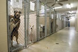 Good Backyard Pets How We Treat Pets In America