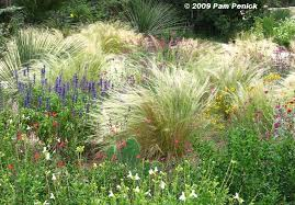 ornamental grasses picture this photo contest entry diggingdigging