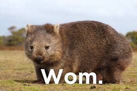 Wombat Memes - 21 jokes so stupid they re actually funny