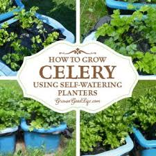 How To Make Self Watering Planters by Self Watering Containers Archives Grow A Good Life