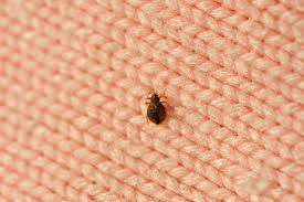 Medicine For Bed Bugs Best Home Remedies For Getting Rid Of Bed Bugs