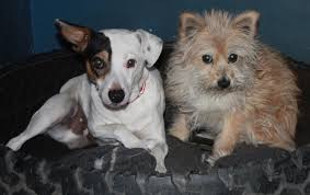 lexus for sale kzn adorable doggies looking for a home northern kzn courier