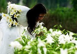 Lily Flower Garden - the lily season in april experience elegant hanoi hanoi travel