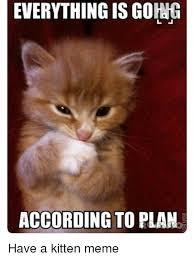 Kittens Memes - 25 best memes about kitten meme kitten memes
