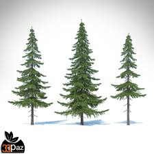 fir tree 3d model cgtrader