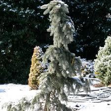 nashvilles u0027 insiders guide to preparing your landscape for winter