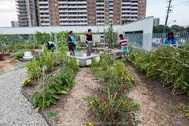 rooftop vegetable garden greenfuse photos garden farm u0026 food