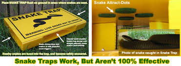 How Do You Get Rid Of Skunks In Your Backyard Eight Ways To Get Rid Of Snakes