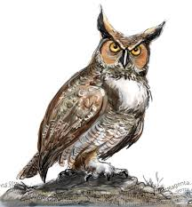 artmagenta a great horned owl from today u0027s earlybird session