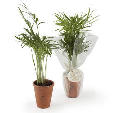 plante d駱olluante bureau plante dépolluante en pot en cadeau écologique