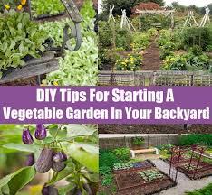 diy tips for starting a vegetable garden in your backyard
