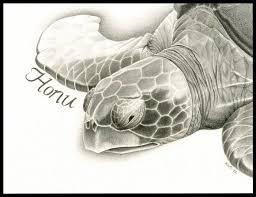 hawaiian sea turtle i sketch pets