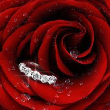 whatsapp wallpaper red flowers flower ring macro rose red wallpaper for whatsapp flowers