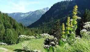 bureau d etude environnement apus nature vincent gaget expertise conseil nature et