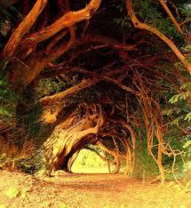 amazing tree tonnels angryboar com magazine