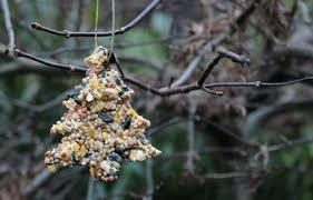 how to make birdseed ornaments with pictures ehow