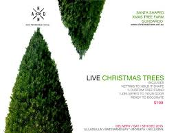 5 ft live christmas tree including delivery hand and eye