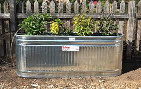 Tall Galvanized Planter by Galvanized Water Tanks As Planters U2013 Blueberry Hill Crafting