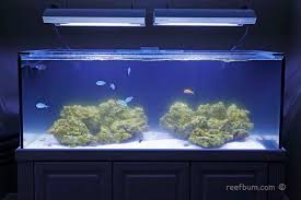 Reef Aquarium Lighting How To Eliminate And Prevent Diatoms In A Reef Tank Reefbum
