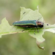 Diseases In Plants And Animals - arkansas invasive pests invasive animals plants and diseases in