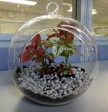 glass globe terrarium from bunnings hardware do it yourself