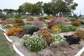 native texas plants master gardeners u0027 picks are north texas hardy gardening dallas