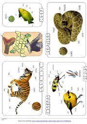 english exercises animal body parts