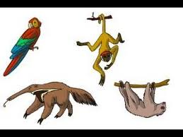 Shoo Rainforest Shop how to draw rainforest animals