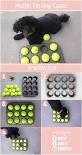 33 dog hacks you need to try today page 3 of 5 diy joy