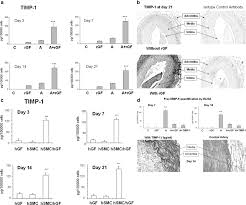preservation of rabbit aorta elastin from degradation by gingival