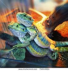 reptile terrarium stock images royalty free images u0026 vectors