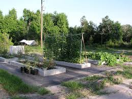 Florida Vegetable Gardening Guide by Florida Backyard Vegetable Gardener Growin U0027 Crazy Acres