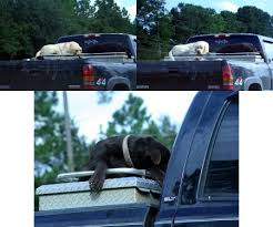 Truck Bed Dog Kennel Dog Safety Tips For Truck Owners Tundra Headquarters Blog