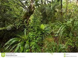 new zealand native plants and trees new zealand native bush royalty free stock photography image