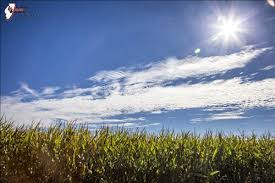 irrigated corn national corn yield winners named 1 636492756891878062 jpg