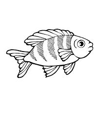 realistic fish clipart 76
