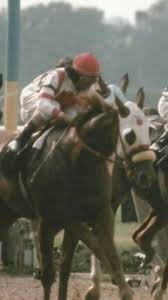 lexus woodford opening times 83 best belmont stakes images on pinterest crowns horse racing