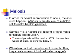 meiosis homework objectives learn the purpose products and