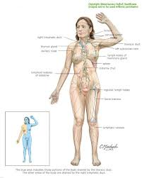 Anatomy Of The Right Arm 112 Best Anatomy Of The Human Body Images On Pinterest Massage
