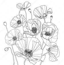 coloring page with poppies u2014 stock photo ultrapro 25246633